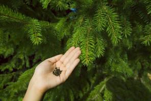 Frön och granar, Skogsindustrierna.jpg