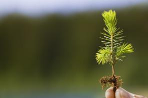 Granplanta, Skogsindustrierna.jpg.jpg